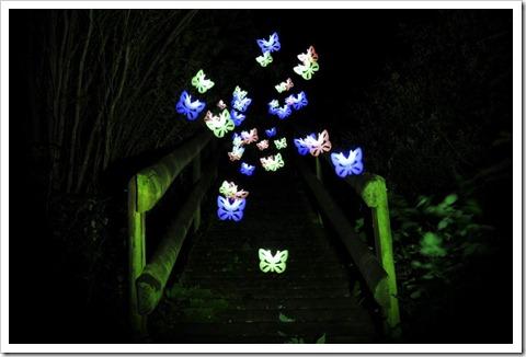Schmetterlinge in der Nacht